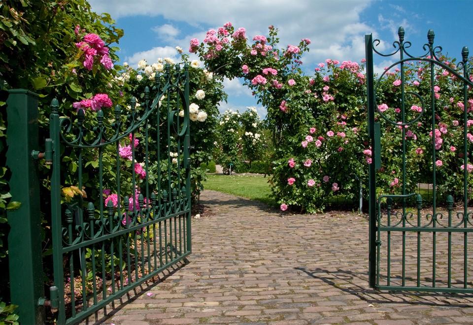 De grootste rozenkwekerij van Nederland